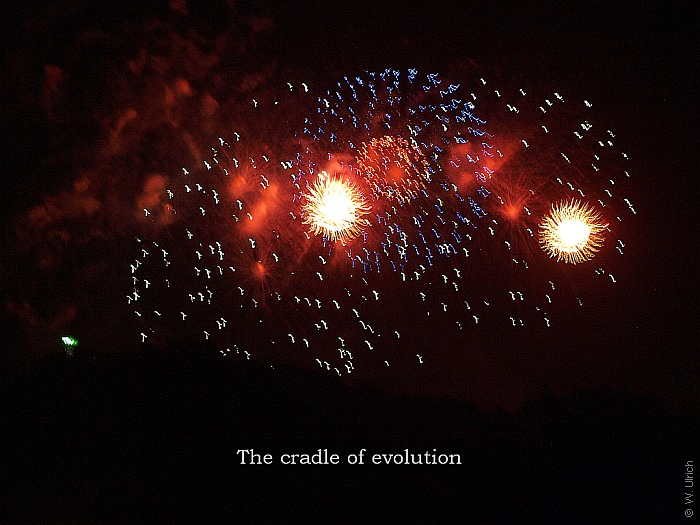 The cradle of evolution