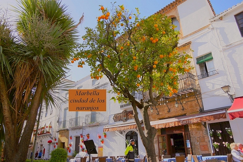 Marbella, city of orange trees