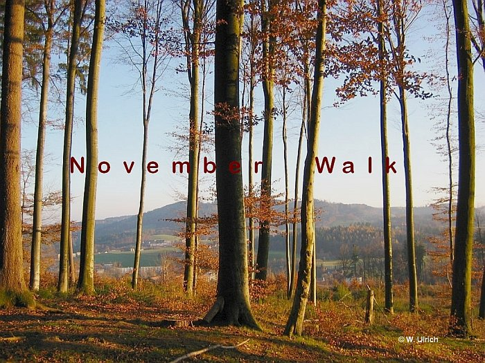 November walk - The shades of the year are growing, but poetry abounds