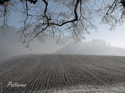 Patterns add interest to winter landscapes (click to enlarge)