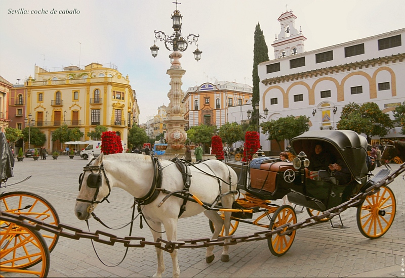 Sevilla's omnipresent horses and carriages
